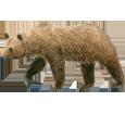 Braunbär - Fell 69
