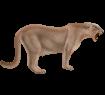 Puma - Fell 2